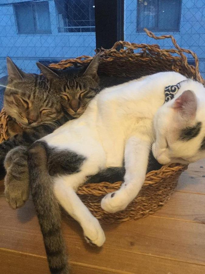 神戸の猫カフェねこまみれの猫