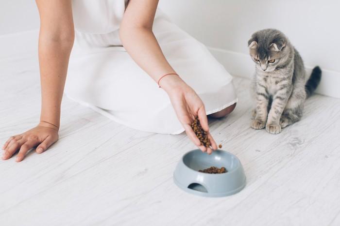 フードボウルに餌を入れる女性と見ている猫