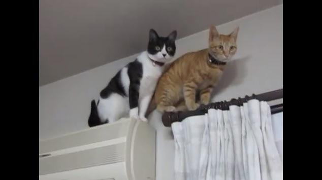 レールとエアコンの上でお座りする猫達