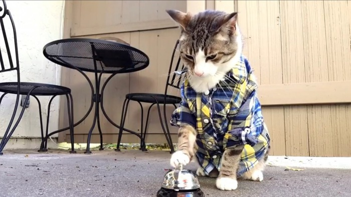 お洒落猫、ベルを鳴らす