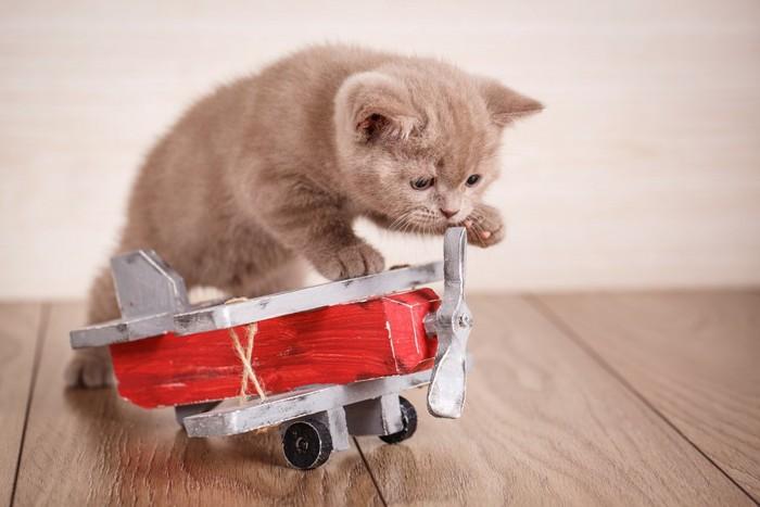 飛行機のおもちゃに乗る子猫