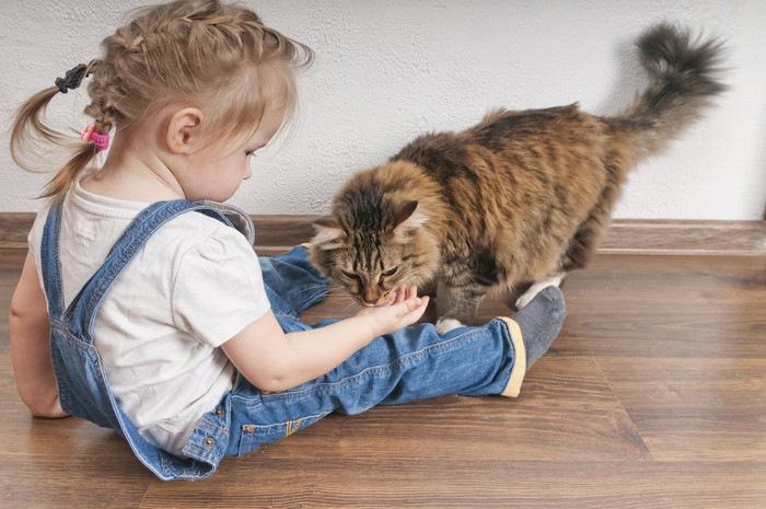 猫に餌をあげる女の子