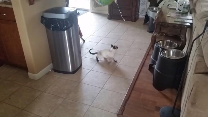 また離してしまう猫