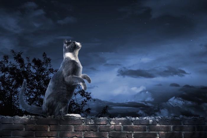 夜の街で立ち上がる身体能力の高い猫