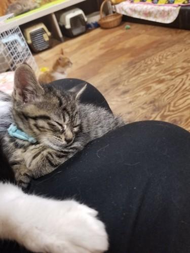 膝の上で眠る猫