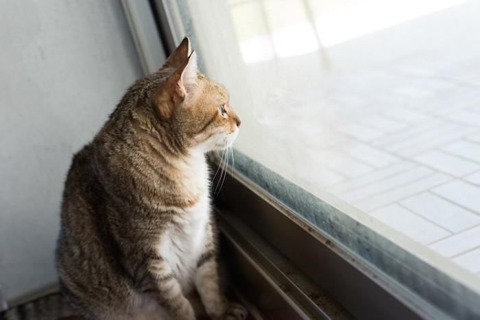 ドアの前に座って待つ猫