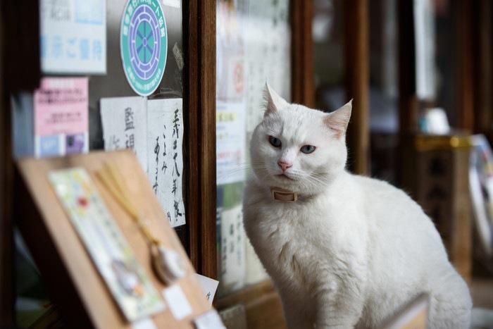 梅宮大社にいる猫
