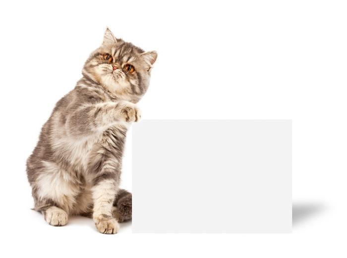 ポスターを持った猫の写真