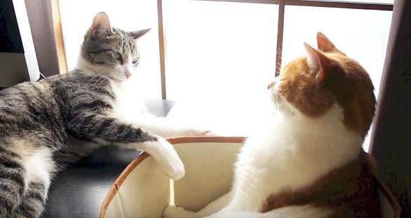 お互いを見る猫たち