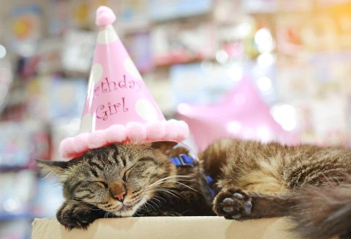 お誕生日の猫