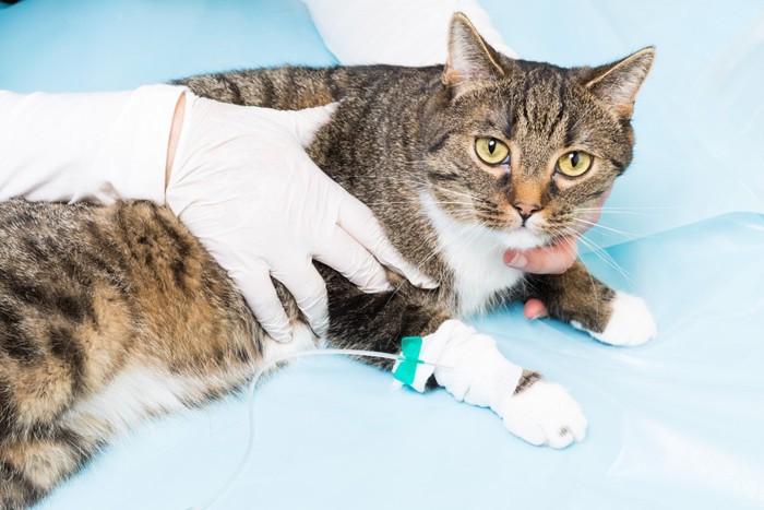 腎不全末期かもしれない猫