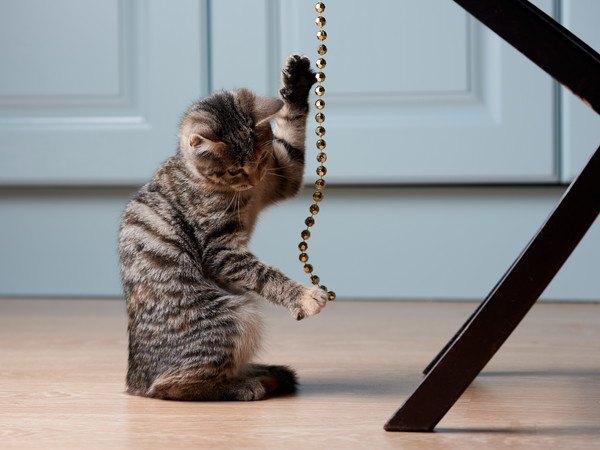 チェーンで遊ぶ猫
