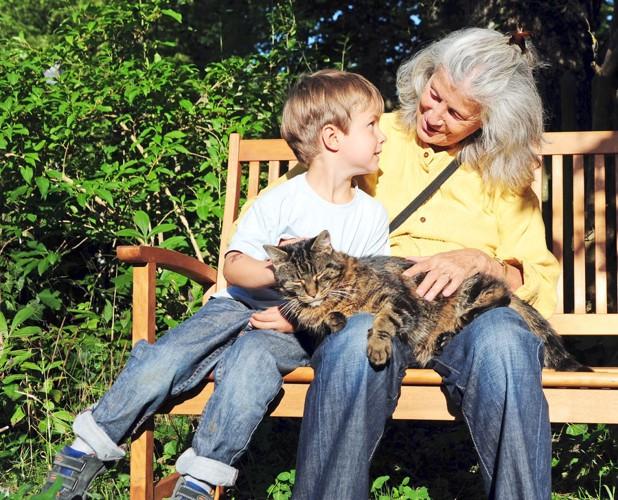 抱っこが好きそうな猫