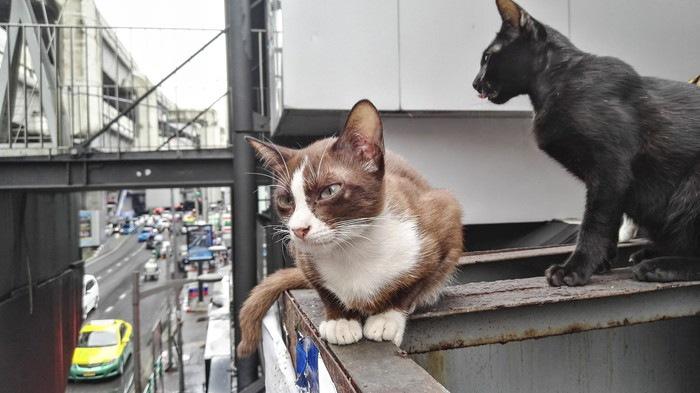 バンコクの二匹の猫