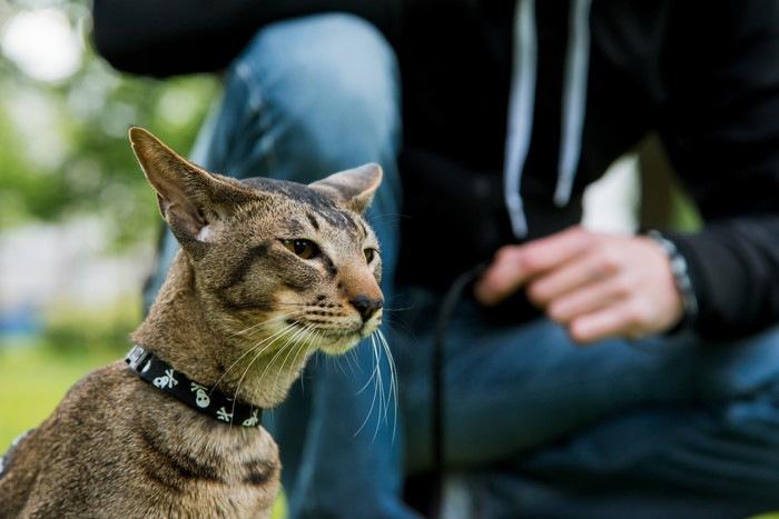 飼い主と首輪繋がれた猫