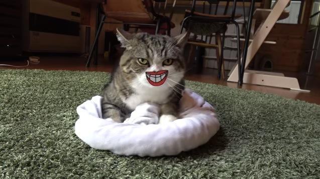 クッションに乗る猫(笑う口)