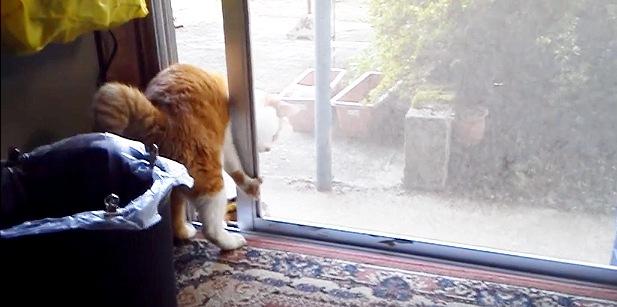 網戸に前足の爪が引っかかる猫