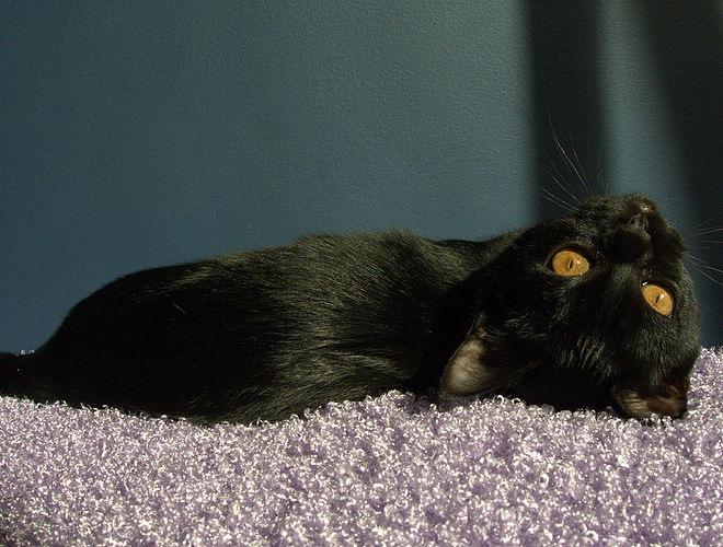 横たわっている黒いマンダレイ