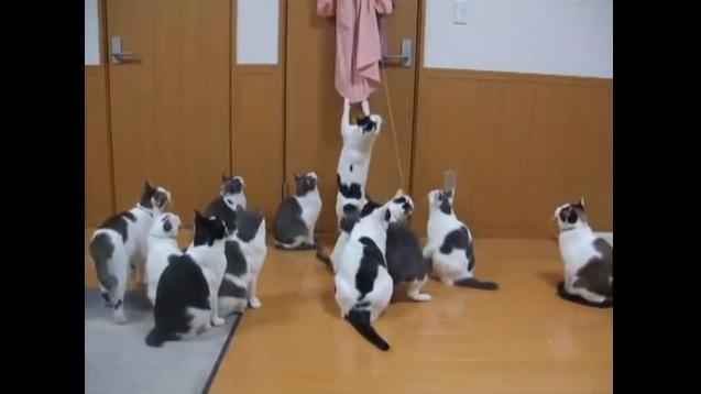 ピンク色の服にじゃれる猫と座って見ている猫たち