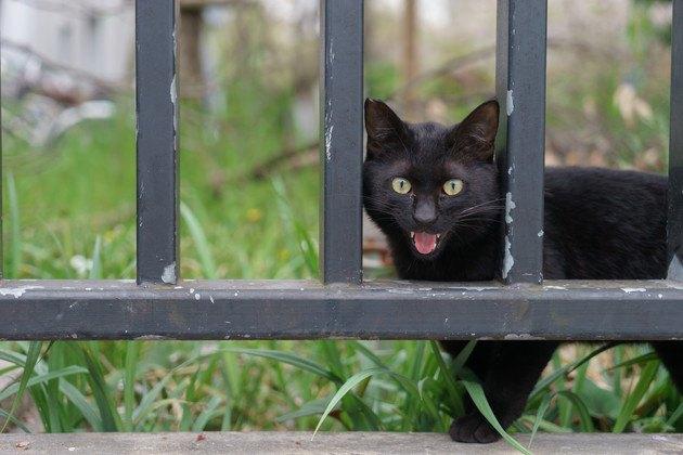 鳴き声がうるさいと近所から言われたくない野良猫