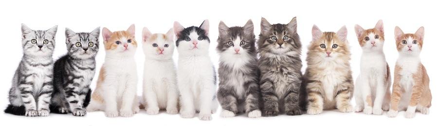 横に並んでいるさまざまな種類の猫