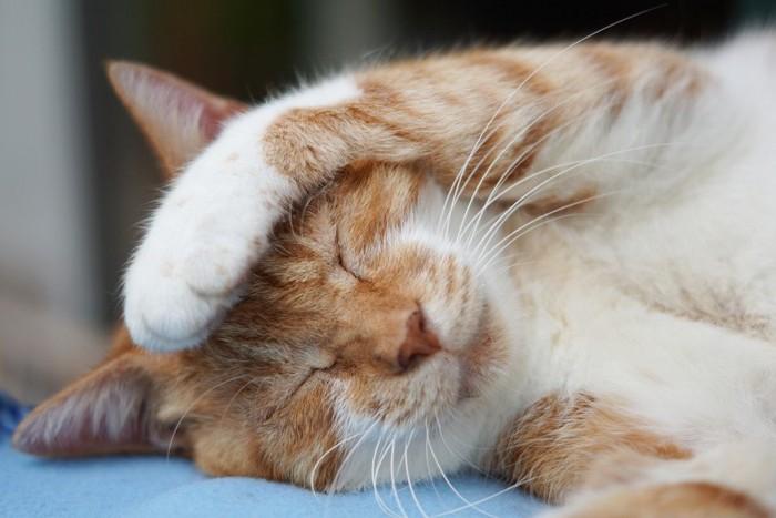 頭の上に手を乗せる猫