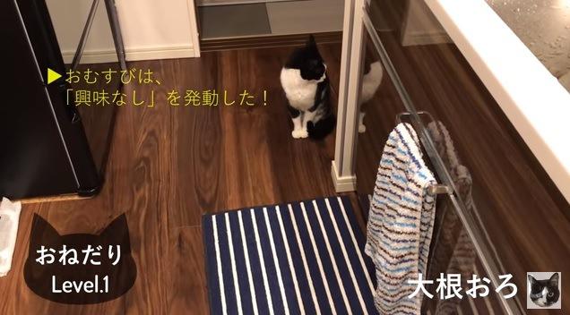 横を向く猫