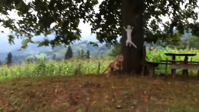 木にジャンプする猫