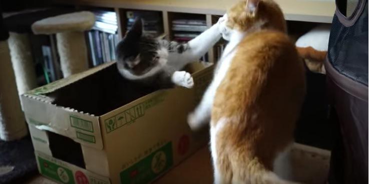 驚かす猫とおどろかされる猫