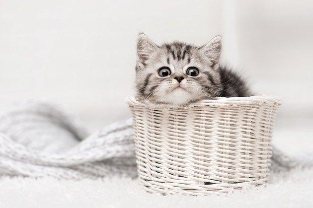 白いカゴの中の子猫の写真