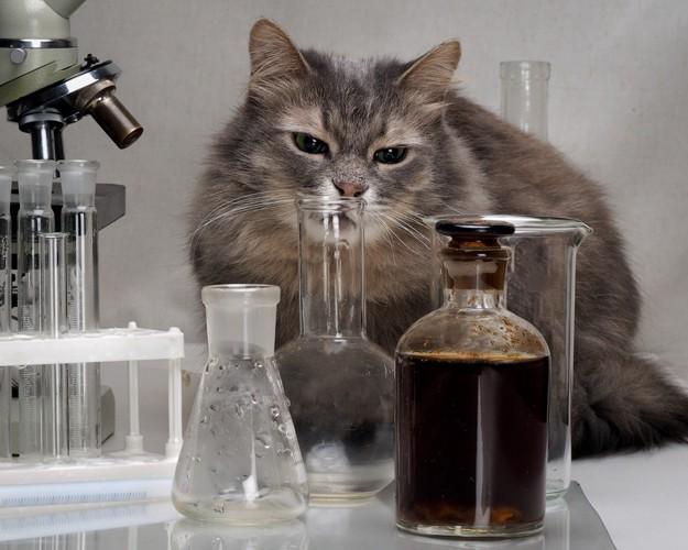 フラスコと猫