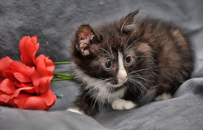 花と靴下柄の子猫