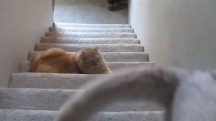 すまし顔の猫