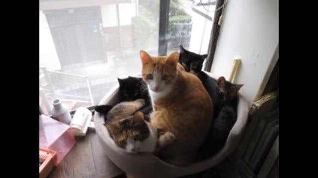 カメラを見上げる5匹の猫
