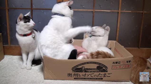 画面左から2番目の猫、パンチ