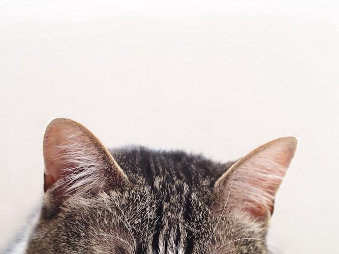 猫の耳アップ