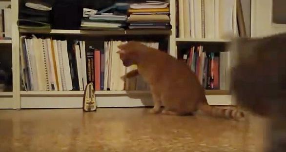 メトロノームに足を伸ばす猫