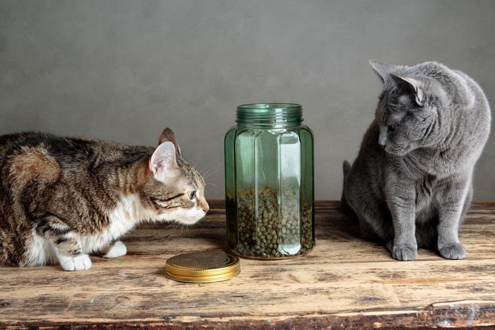 フードと猫