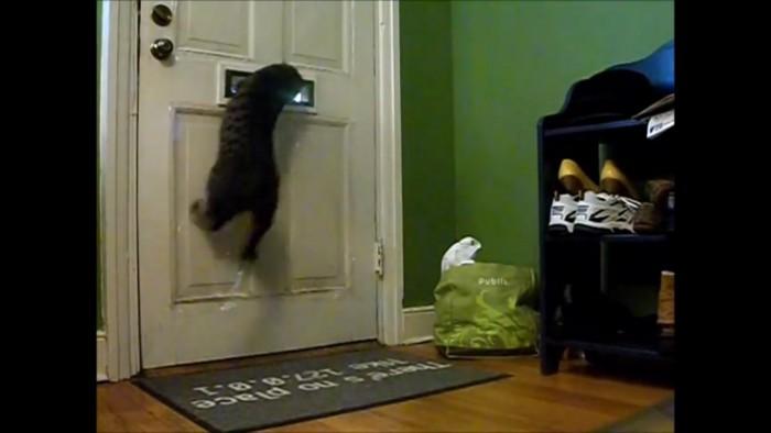 受け取る猫