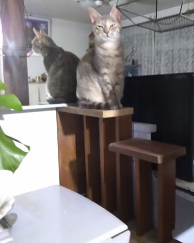 階段にのっている猫