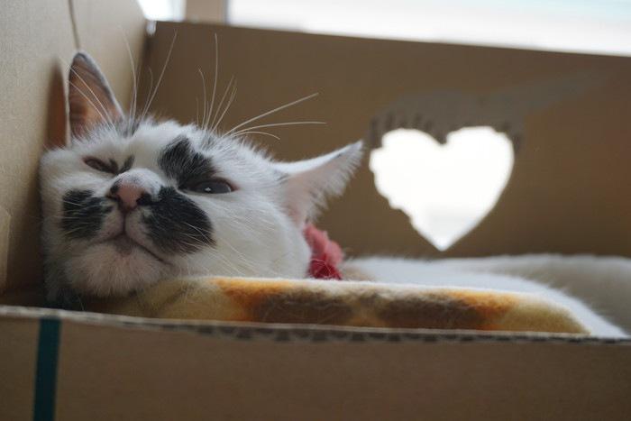 ダンボールの中の猫