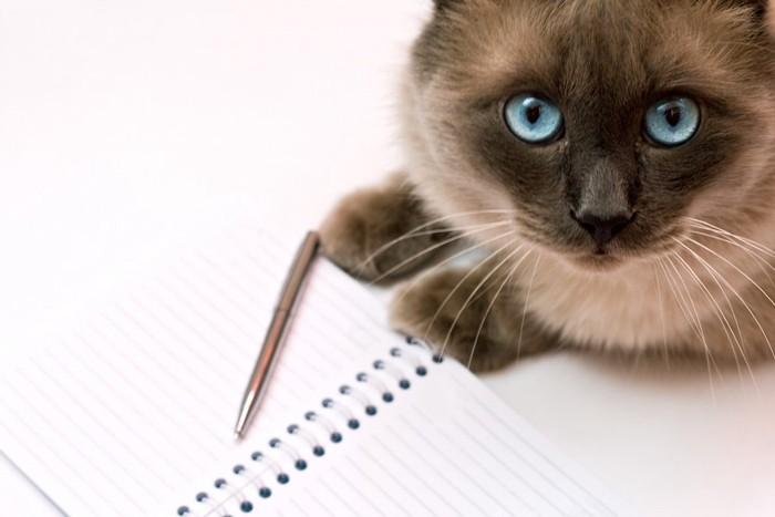 ノートとペンとこちらを見つめる猫