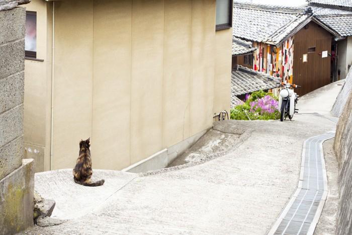島にいる猫と民家