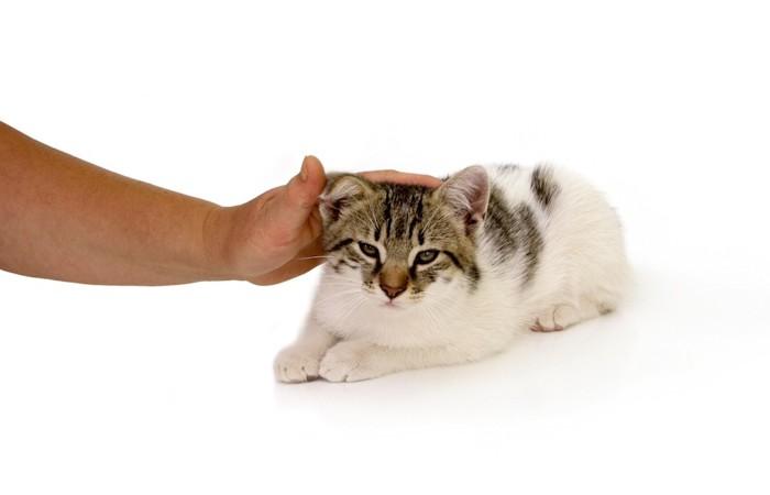 子猫を撫でている人の手