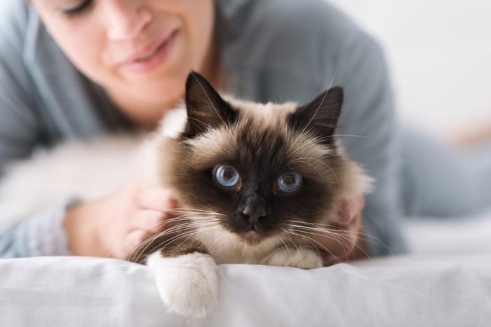 ベッドで抱きしめられる猫