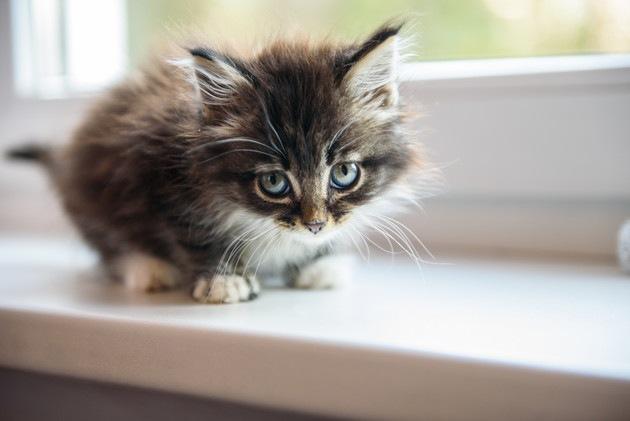 窓際にいる子猫