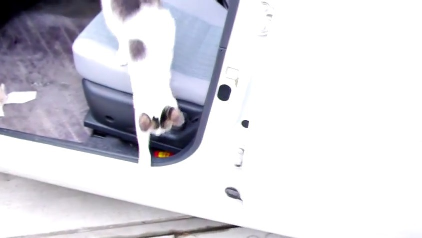 匹:車から降りる猫