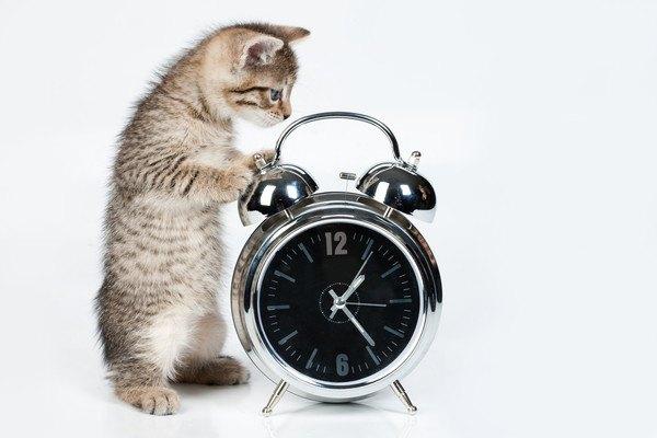 時計と子猫
