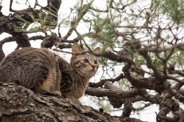 木の上にいるキジトラ