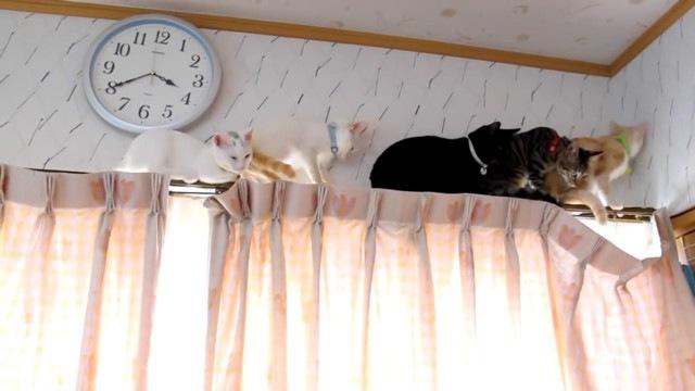 カーテンレールにのる猫たち
